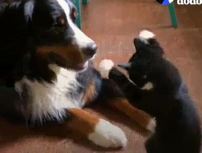 Vole se k'o pas i mačka