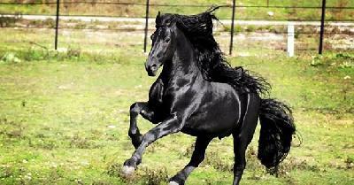 Ovaj prekrasan konj ostavit će vas bez daha