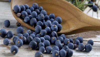 Plava čarobnica: Blago jače i od antibiotika