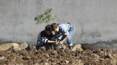 Djeca u Homsu pošumljavaju površine na kojima je posječeno drveće