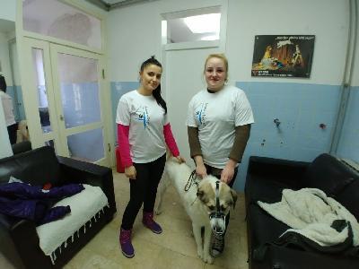 Veterinarska stanica Bihać provela još jednu akciju sterilizacije i kastracije pasa