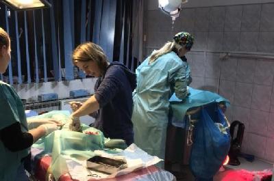 Veterinarska stanica Bihać ponovo u akciji kastriranja i steriliziranja pasa i mačaka