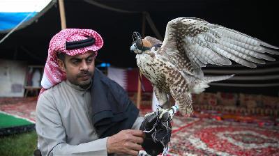 Katarski jastrebovi atrakcija na Festivalu etnosportova i kulture u Istanbulu