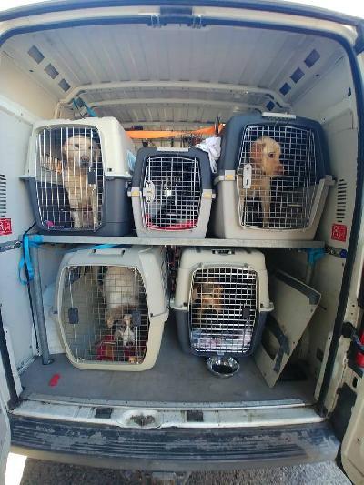 Još 17 pasa iz azila transportirano u Njemačku