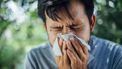 Postoji jasna veza između narušene crijevne flore i učestalih alergija